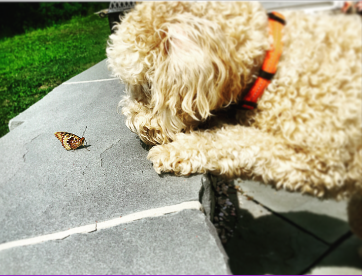 Dog with Butterfly