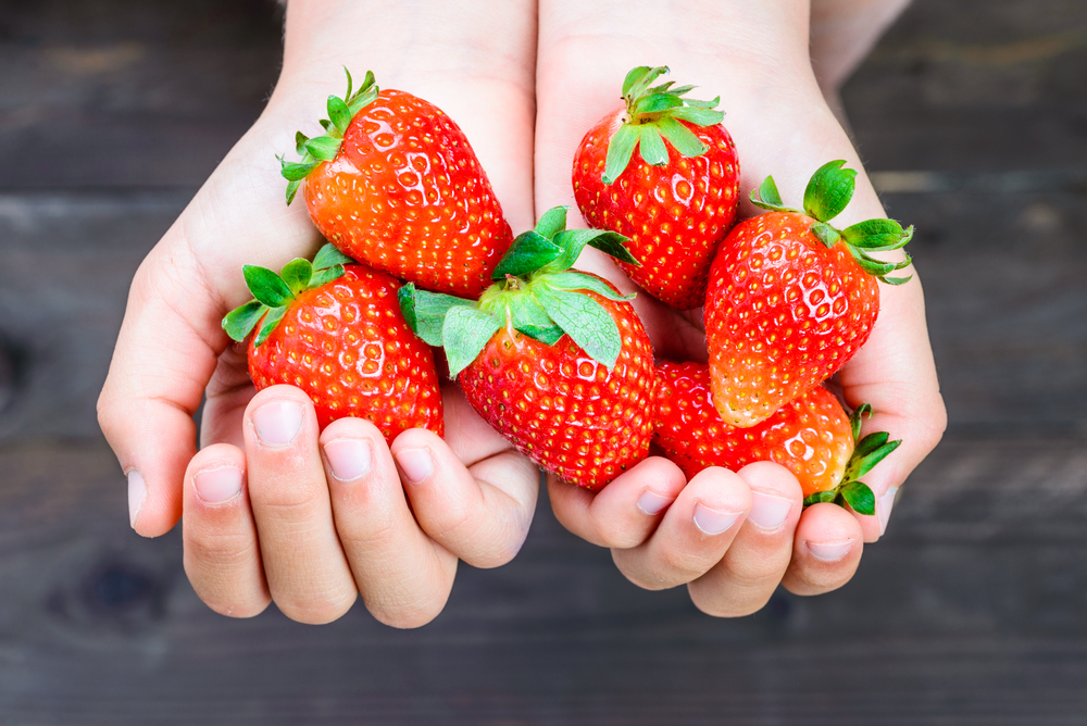 Strawberries in a Hand